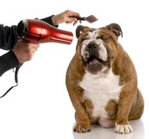 Blow Dryer and pet dog image